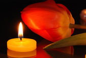 Romantic composition with a tulip and candle — Stock Photo