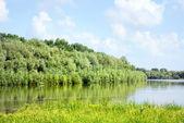 Sommerlandschaft mit wald und fluss — Stockfoto