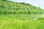 Paisaje de verano con bosque y río — Foto de Stock