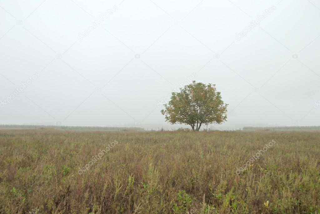 In the autumn foggy morning one tree in the field  — Stock Photo #12116231