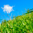 Field on a background of the blue sky — ストック写真