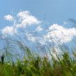 Green field on a background of the blue sky — ストック写真