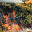 Fire in the dry grass field — Stock Photo