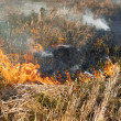 Fire in the dry grass field - Stock Photo