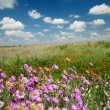summer landscape with wildflowers — Stock Photo