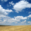 Wheaten field and the sky — Stock Photo