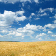 Wheaten field and sky — Stock Photo #12120613