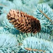Branches of a natural fur-tree — Stock Photo
