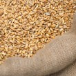 Wheat crop in a bag — Stock Photo