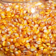 Corn crop in glass — Stock Photo #12121389