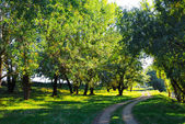 Summer landscape with bright light — Стоковое фото