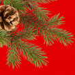 Christmas tree with cone on red — Stock Photo