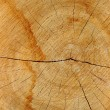 Stock Photo: Sawn wood texture.