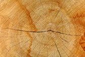 Sawn wood texture. — Stock Photo