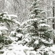 Snowfall christmas tree in forest - Foto de Stock  