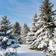 Snowy trees - Foto Stock