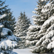 Snowy trees at day - Stockfoto