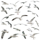 White birds set. isolated on white — Stock Photo