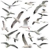 Oiseaux mis isolés — Photo