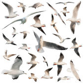 Birds set isolated — Stock Photo