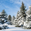 Snowy trees - Foto de Stock