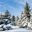 Snowy trees - Stock Photo