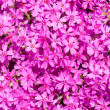 Stock Photo: Pink flowers glade background