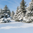 Snowy trees at day — Stock Photo