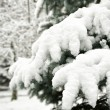 Fir tree branches with snow — Stock Photo #30802597