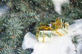 Gift boxes on winter tree with snowfall — Stock Photo
