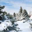 Fir trees covered by snow — Lizenzfreies Foto