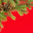 Photo: Christmas background. fir branches and cones on red