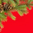 Christmas background. fir branches and cones on red — Φωτογραφία Αρχείου