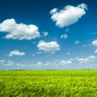 Sunny green wheat field and blue sky — Stock Photo