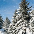 Fir trees covered by snow — Stock fotografie