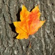 Autumn leaf on tree bark background — Stock Photo