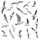 Birds collection isolated on white — Stock Photo