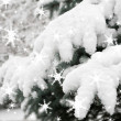 Fir tree branches with snow — Stock Photo