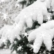 Fir tree branches with snow — Stockfoto