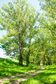 Bright summer forest and dirt road — Stock Photo