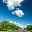 Summer road landscape — Stock Photo