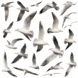 Bird collection on white — Stock Photo
