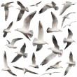 Bird collection on white — Stock Photo