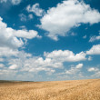 Sunny yellow wheat field and blue sky — Stok fotoğraf