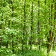 Bright summer forest — Stock Photo