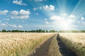 Estrada de terra no campo de trigo — Fotografia Stock