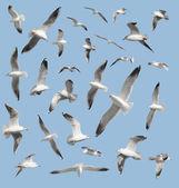 Bird on sky background — Stock Photo
