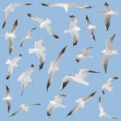 Many birds on sky background — Stock Photo