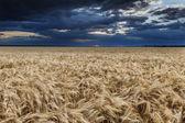 Dark dramatic field and sky landscape — Stock Photo
