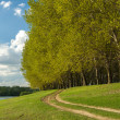 Summer forest and ground road near riverside — Stock Photo #45240333